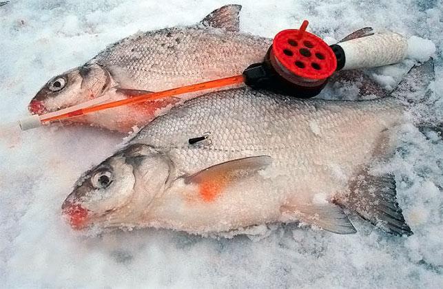aquatic-fish-004