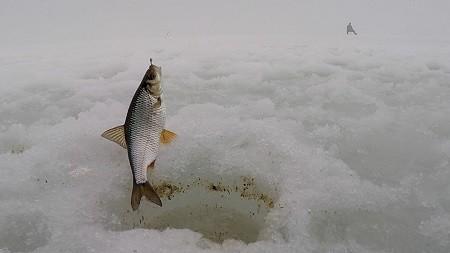 Ловля плотвы зимой: правильно выбираем наживки насадки и место ловли