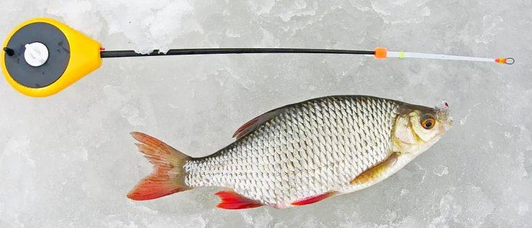 Как правильно ловить плотву зимой