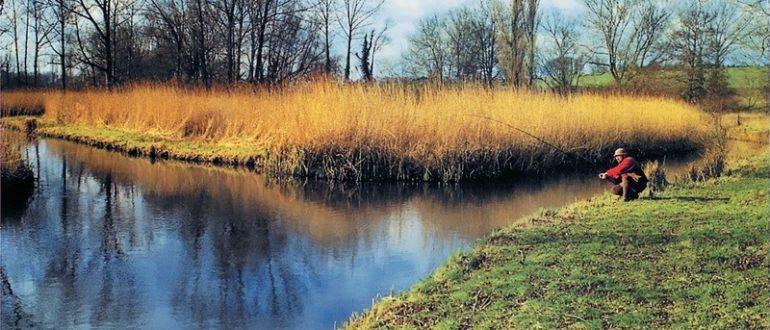 Речные заводи для рыбы