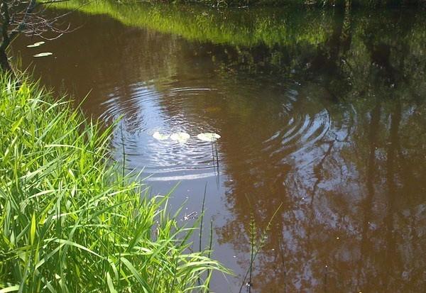 Рыбалка в малых реках подмосковья