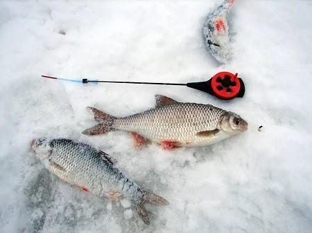 Ловля плотвы зимой на можайском водохранилище