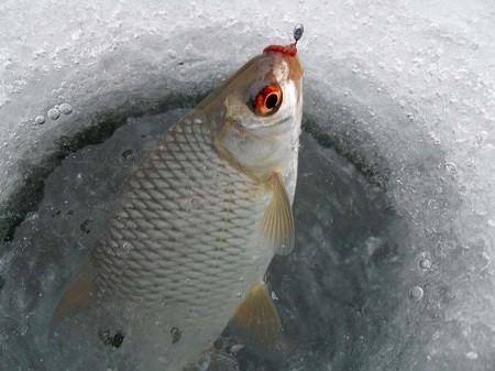 Ловля плотвы на рузском водохранилище зимой