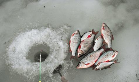 Как ловить плотву в зимнее время