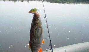 Ловля голавля в водоёмах без течения