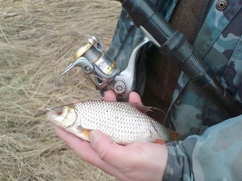 Как ловить плотву на поплавочную удочку