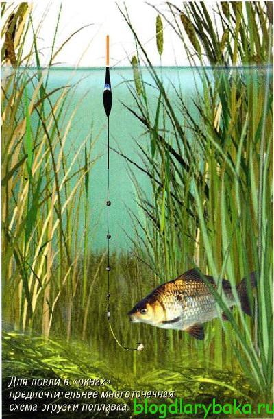 Ловля крупного карася в заросших водоемах