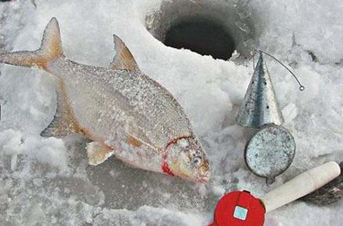 Как правильно прикармливать рыбу по первому льду