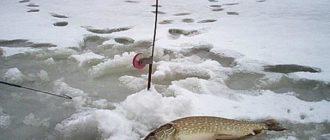 Ловля щуки весной на водохранилищах