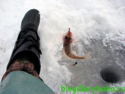 ловля ерша в феврале