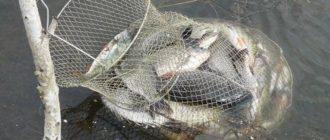 Как сделать правильный выбор садка для рыбалки