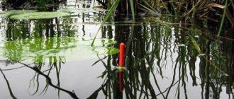 Как поймать карася на болоте приманки и снасти для ловли карася на болоте