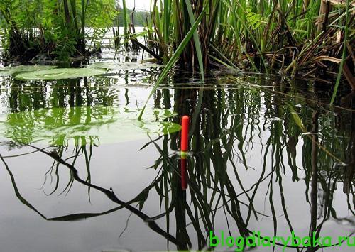 Как поймать карася на болоте