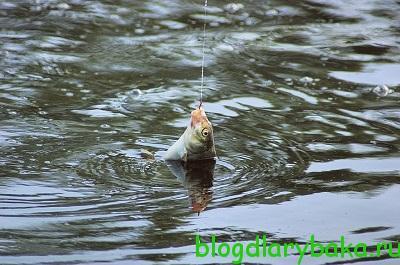 как ловить леща на озере