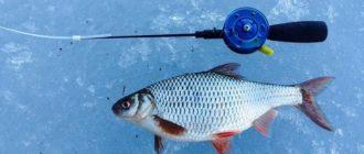 Ловля плотвы по последнему льду выбор снасти и места ловли
