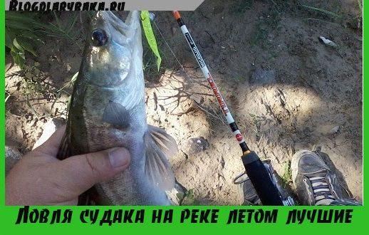 Ловля судака на реке летом